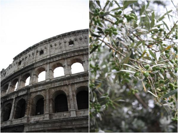 Colosseo and an Olive Tree