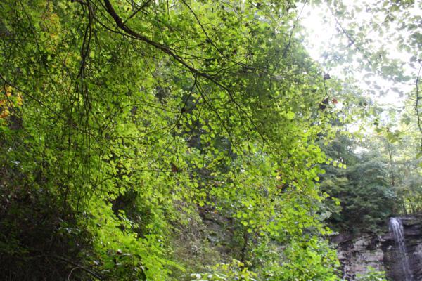green tree cloundland canyon